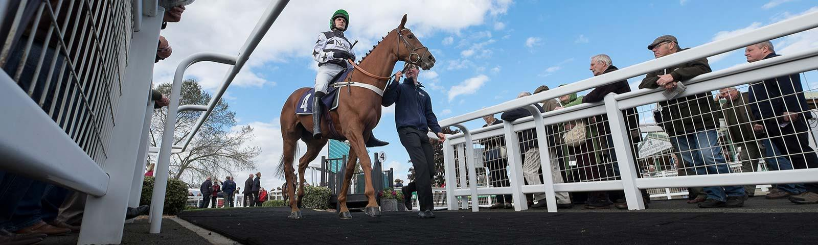 Jockey on a horse being led from parade ring onto the race track.