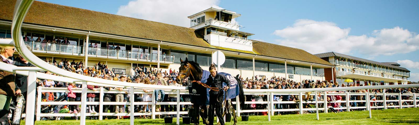 Horse being led through parade ring with crowds watching in the background.